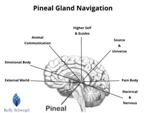 clicks of the pineal